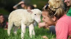 Lamb Wallpaper HD