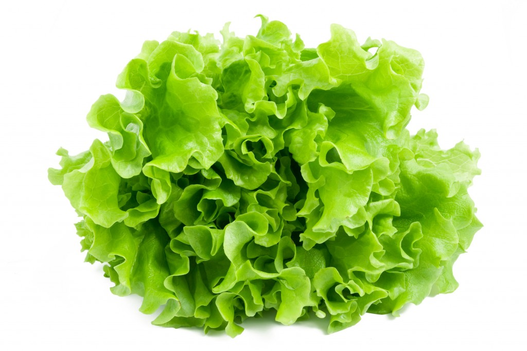 Lettuce wallpapers HD