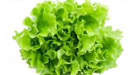 Lettuce Wallpaper Full HD