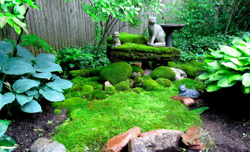 Moss In The Garden wallpapers HD