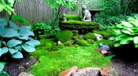 Moss In The Garden Best Wallpaper