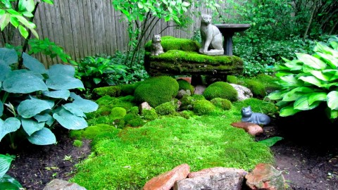 Moss In The Garden wallpapers high quality