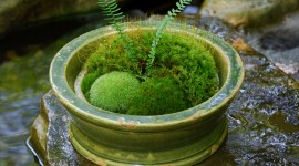 Moss In The Garden Photo