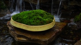 Moss In The Garden Photo Download