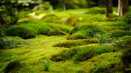 Moss In The Garden Photo Free