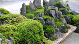Moss In The Garden Photo#1