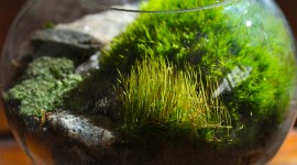 Moss In The Garden Wallpaper
