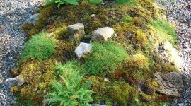 Moss In The Garden Wallpaper For IPhone