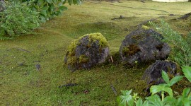 Moss In The Garden Wallpaper For Mobile#1