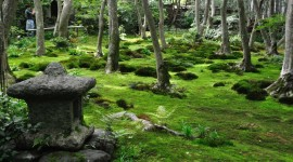 Moss In The Garden Wallpaper For PC