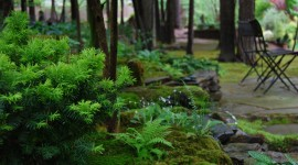 Moss In The Garden Wallpaper Gallery