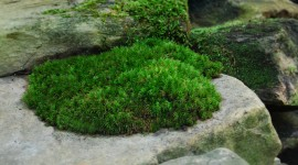 Moss In The Garden Wallpaper#1