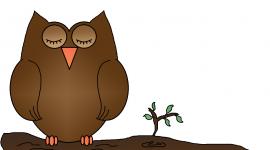 Owl Sleepy Image
