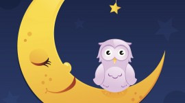 Owl Sleepy Image Download