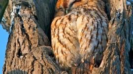 Owl Sleepy Wallpaper For IPhone