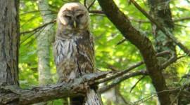 Owl Sleepy Wallpaper For Mobile