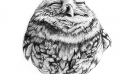 Owl Sleepy Wallpaper For Mobile#1