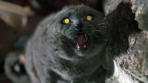 Pet Sematary 2019 wallpapers high quality