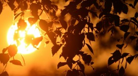Sun In The Branches Image