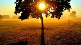 Sun In The Branches Photo Download
