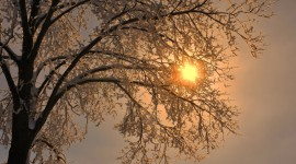 Sun In The Branches Wallpaper Gallery