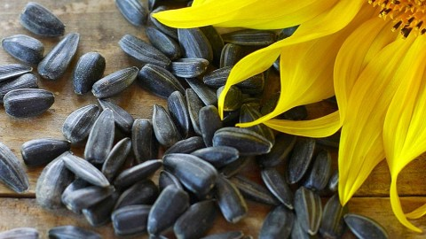 Sunflower Seeds wallpapers high quality