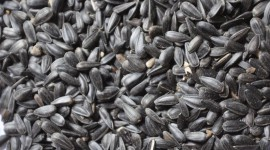Sunflower Seeds High Quality Wallpaper