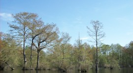 Swamp Cypress Wallpaper For PC