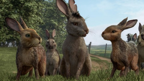 Watership Down wallpapers high quality