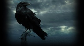 Black Raven Wallpaper Download Free