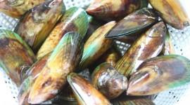 Black Sea Mussels Best Wallpaper