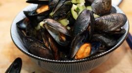 Black Sea Mussels Wallpaper Free