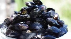 Black Sea Mussels Wallpaper HQ