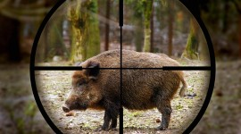 Boar Hunting High Quality Wallpaper