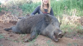 Boar Hunting Wallpaper Gallery