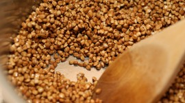 Buckwheat High Quality Wallpaper