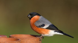 Bullfinch Aircraft Picture