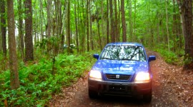 Car In The Forest Photo