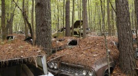 Car In The Forest Wallpaper For Android#1