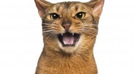 Cat's Meow Photo Free