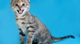 Cat's Meow Wallpaper Free