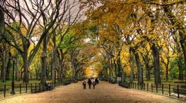 Central Park Wallpaper 1080p