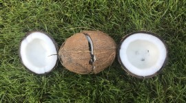 Coconut Opening Wallpaper For Desktop