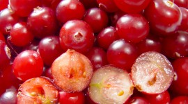 Cranberry Wallpaper Download Free