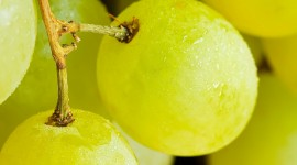 Fruit Macro Wallpaper Download