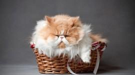 Furry Cats Best Wallpaper