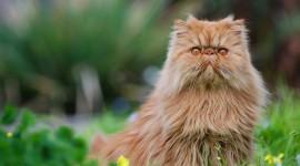 Furry Cats Desktop Wallpaper