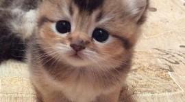 Furry Cats Photo