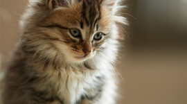 Furry Cats Photo Download