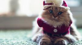 Furry Cats Photo Free